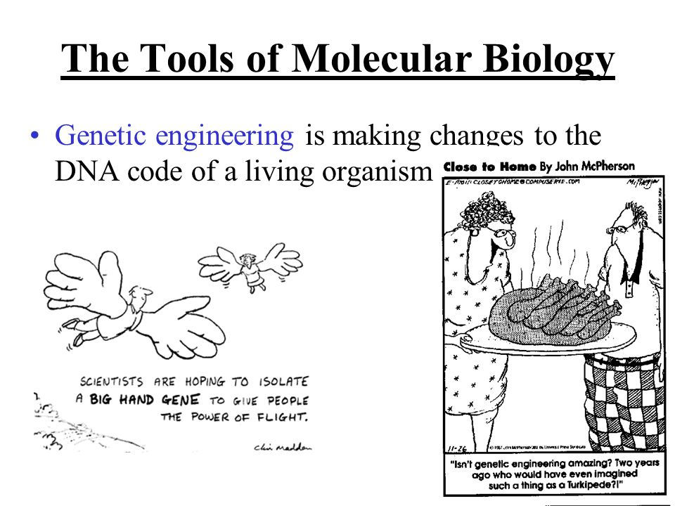 The Tools of Molecular Biology Genetic engineering is making changes to the DNA code of a living organism