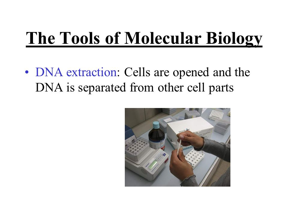 The Tools of Molecular Biology DNA extraction: Cells are opened and the DNA is separated from other cell parts