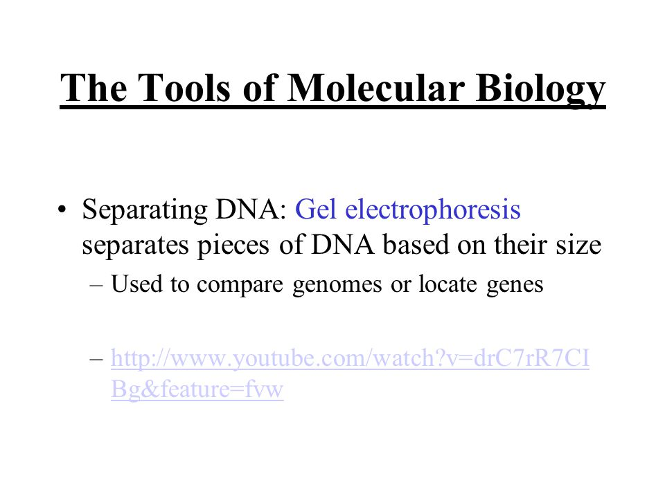 The Tools of Molecular Biology Separating DNA: Gel electrophoresis separates pieces of DNA based on their size –Used to compare genomes or locate genes –  v=drC7rR7CI Bg&feature=fvwhttp://  v=drC7rR7CI Bg&feature=fvw