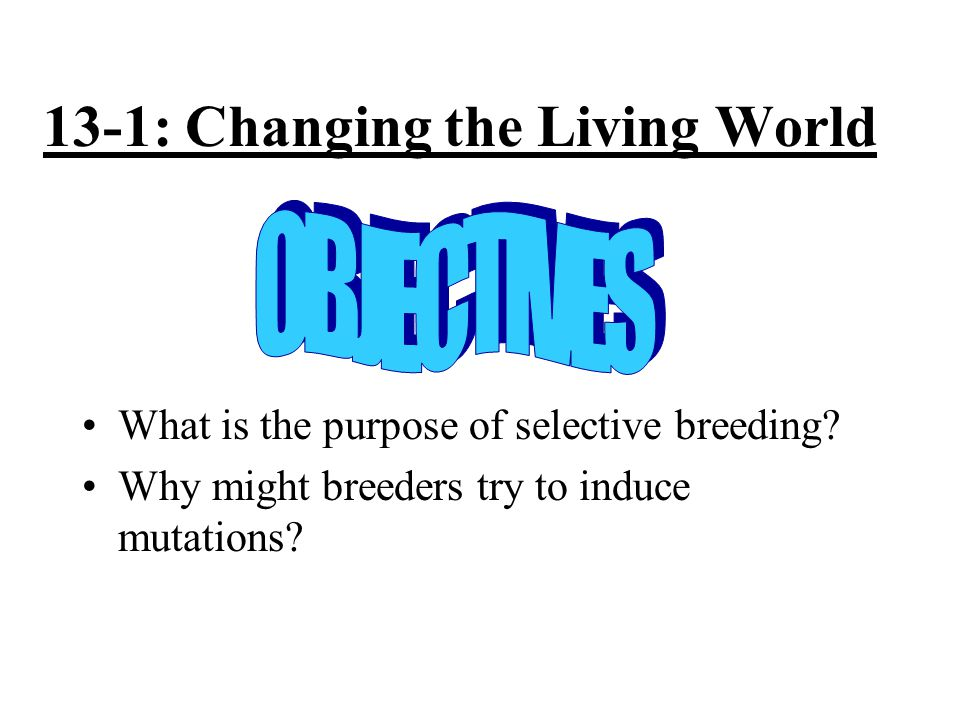 13-1: Changing the Living World What is the purpose of selective breeding.
