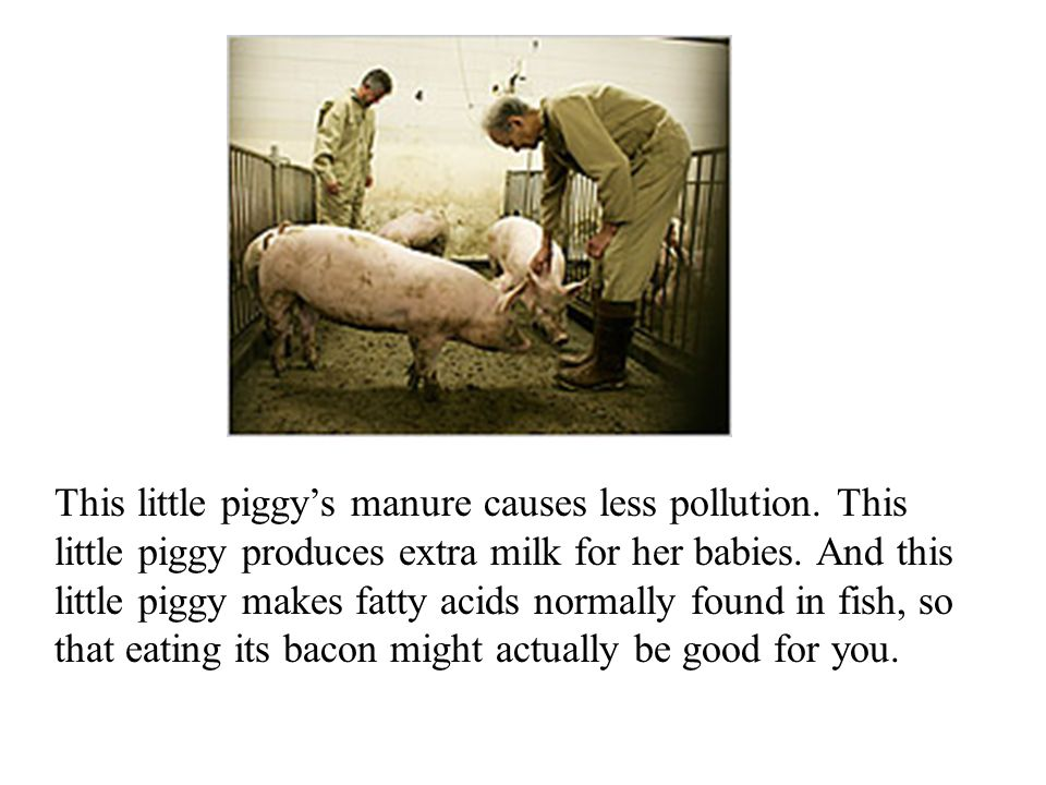 This little piggy's manure causes less pollution.