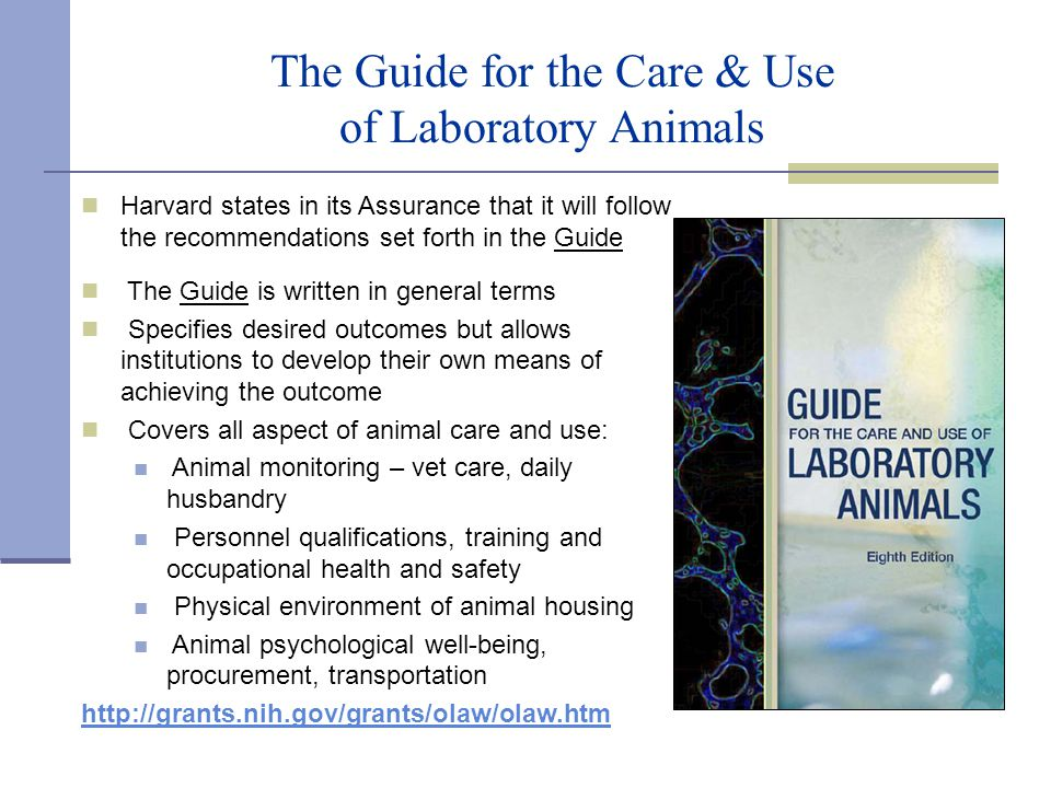 REGULATIONS & POLICIES REGARDING THE USE OF ANIMALS IN
