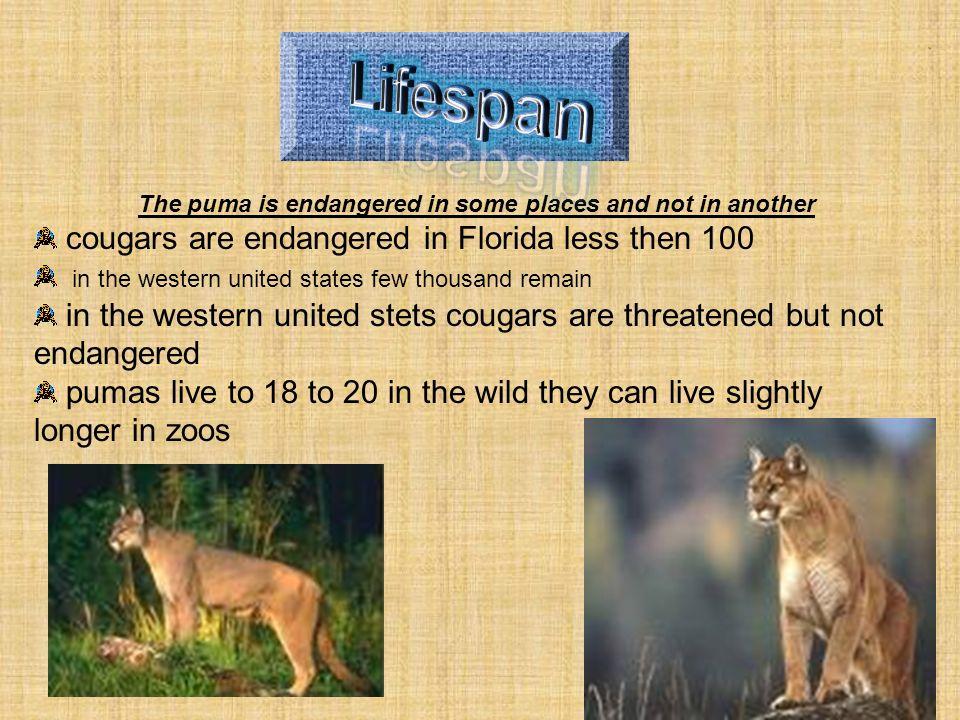 Cougars life span
