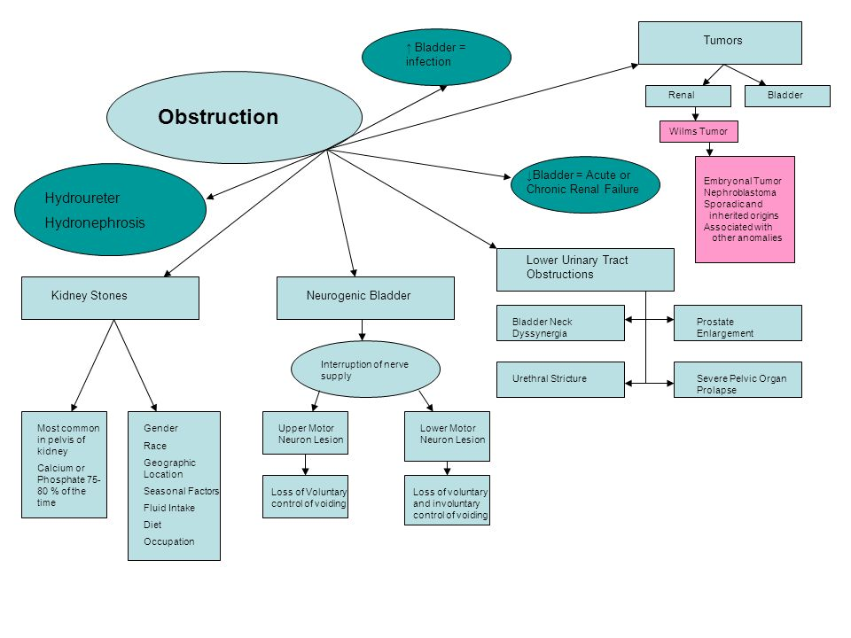 Renal Failure Concept Map.Alterations Of Renal And Urinary Tract Function Concept Maps Gary L