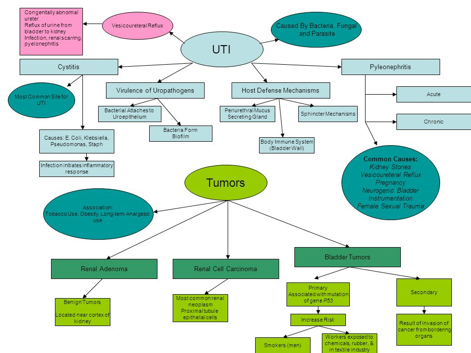 Alterations Of Renal And Urinary Tract Function Concept Maps Gary L