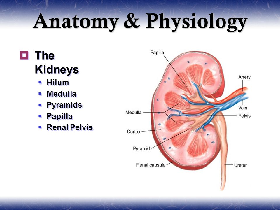 Urology & Nephrology. Sections  Anatomy and Physiology  General ...