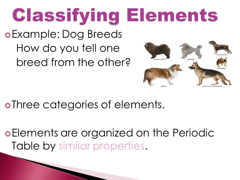 Example: Dog Breeds How do you tell one breed from the other.