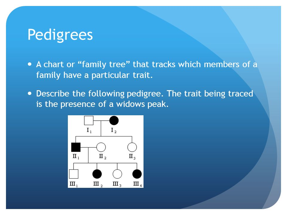 Pedigrees A chart or family tree that tracks which members of a family have a particular trait.