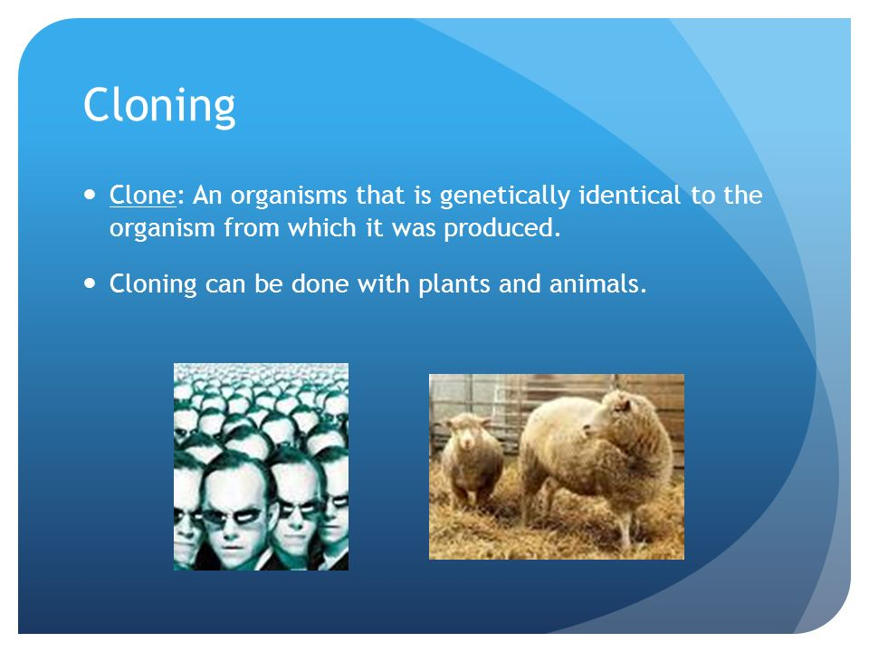 Cloning Clone: An organisms that is genetically identical to the organism from which it was produced.