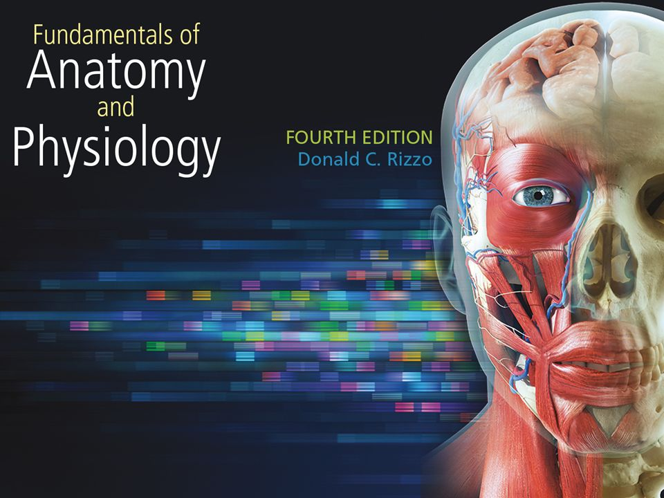 1. 2 Chapter 1 The Human Body 3 Introduction Anatomy: the study of ...