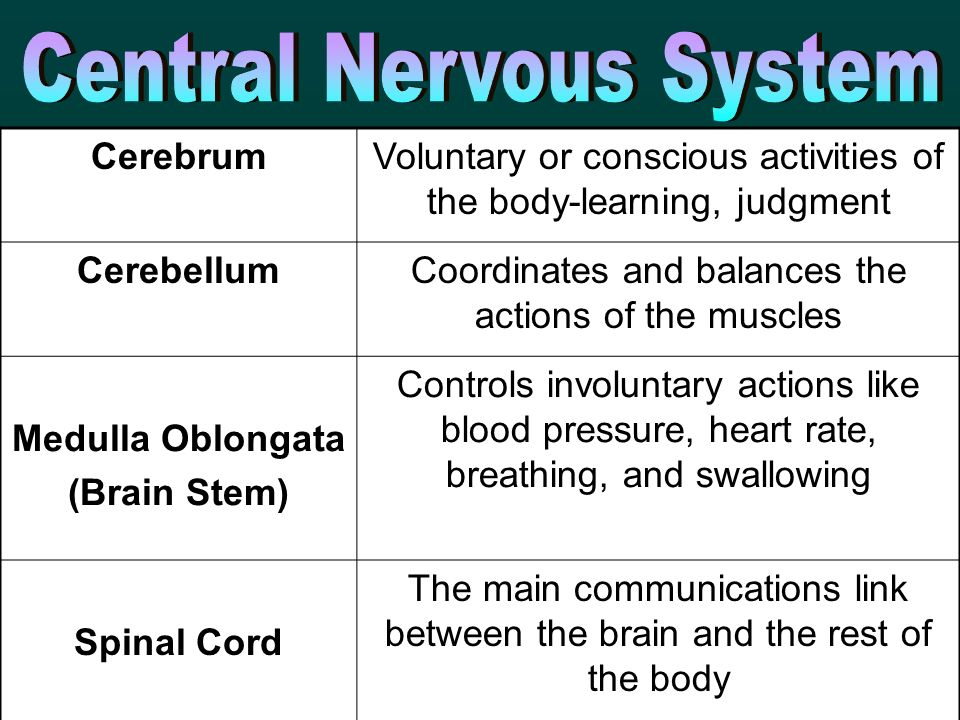 CerebrumVoluntary or conscious activities of the body-learning, judgment CerebellumCoordinates and balances the actions of the muscles Medulla Oblongata (Brain Stem) Controls involuntary actions like blood pressure, heart rate, breathing, and swallowing Spinal Cord The main communications link between the brain and the rest of the body