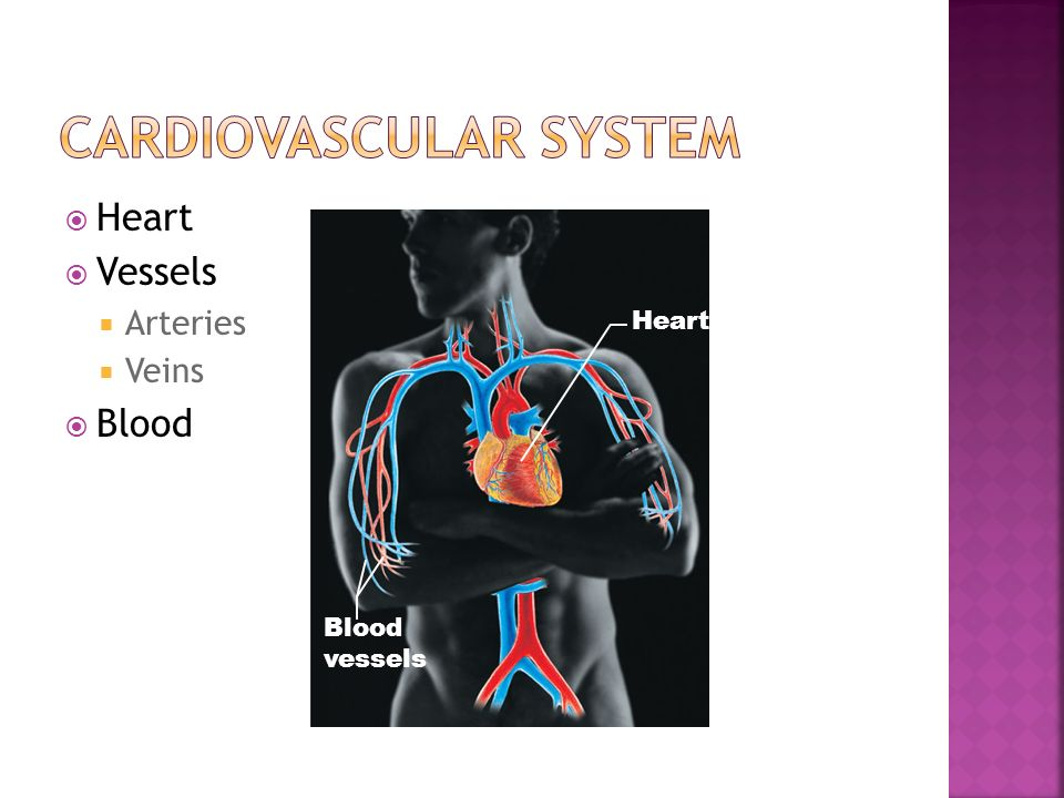  Heart  Vessels  Arteries  Veins  Blood Heart Blood vessels