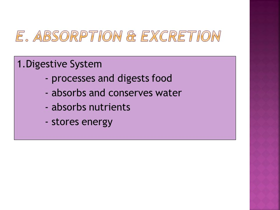 1.Digestive System - processes and digests food - absorbs and conserves water - absorbs nutrients - stores energy