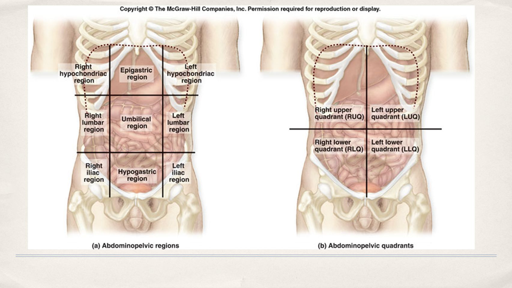 Chapter 1 The Human Body: An Orientation. - ppt video online download