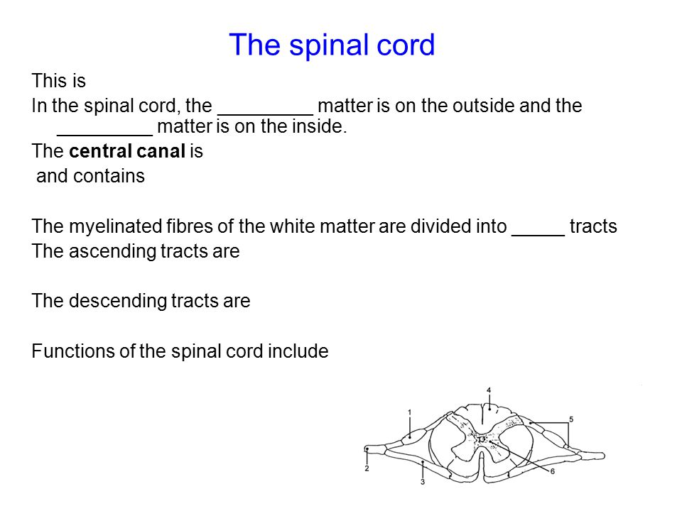 The spinal cord This is In the spinal cord, the _________ matter is on the outside and the _________ matter is on the inside.