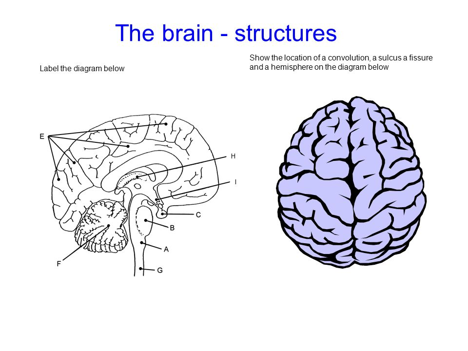 The brain - structures Show the location of a convolution, a sulcus a fissure and a hemisphere on the diagram below Label the diagram below H I