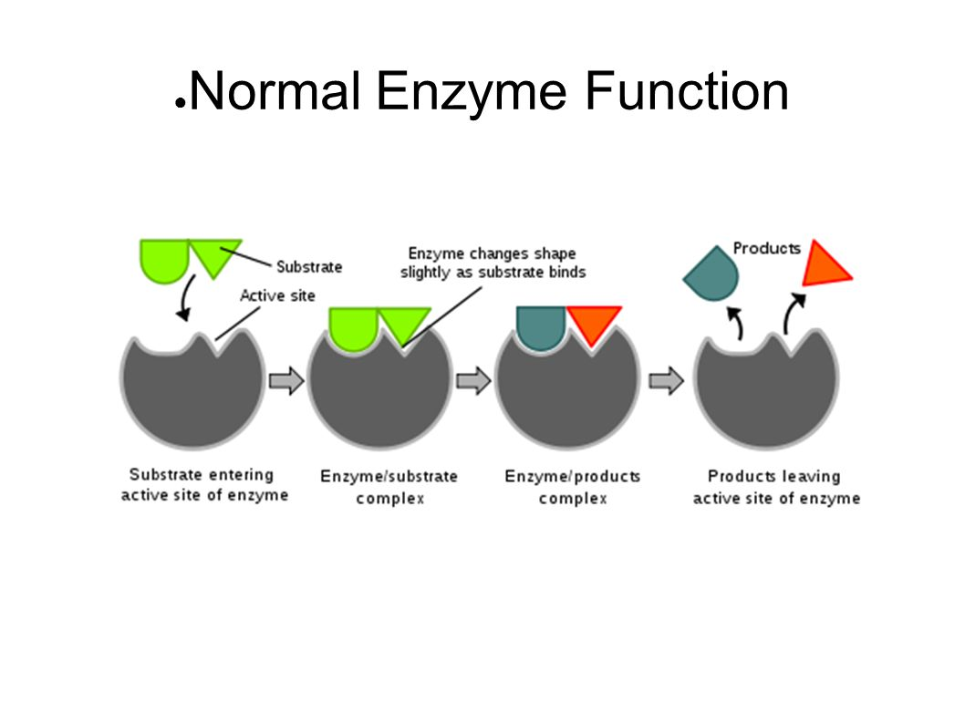 the function of the enzyme and how it affects our chances for survival The chemotherapy method affects the heart muscles and this decreases the heart pumping ability and increases the chances of heart failure in the future herceptin , a medication (antibody) used on women with already high-risk genetic profiles, is linked with the cardiovascular toxicity and later on heart failure.
