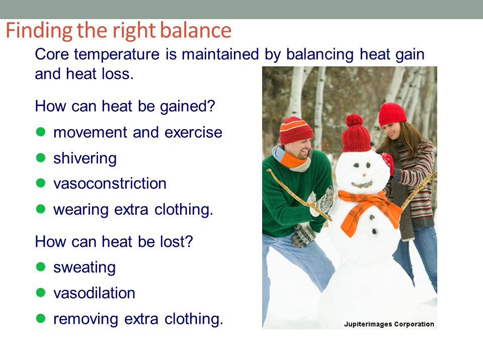 Finding the right balance Core temperature is maintained by balancing heat gain and heat loss.