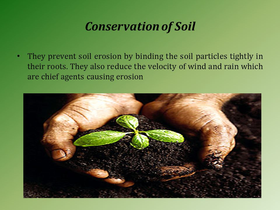 Conservation of Soil They prevent soil erosion by binding the soil particles tightly in their roots.