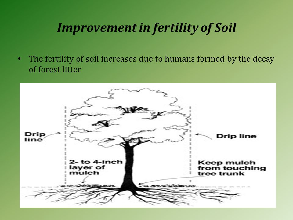 Improvement in fertility of Soil The fertility of soil increases due to humans formed by the decay of forest litter