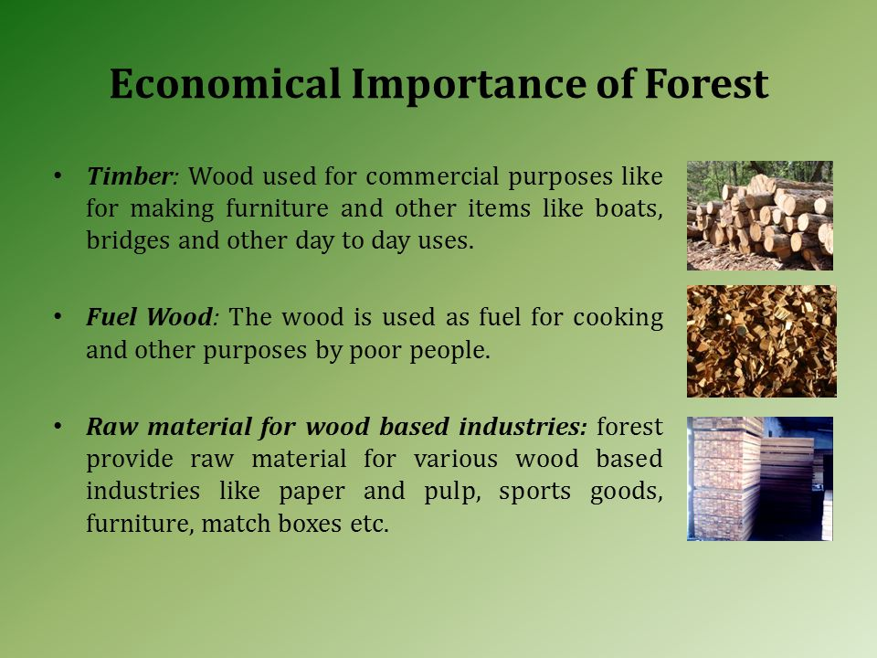 Economical Importance of Forest Timber: Wood used for commercial purposes like for making furniture and other items like boats, bridges and other day to day uses.