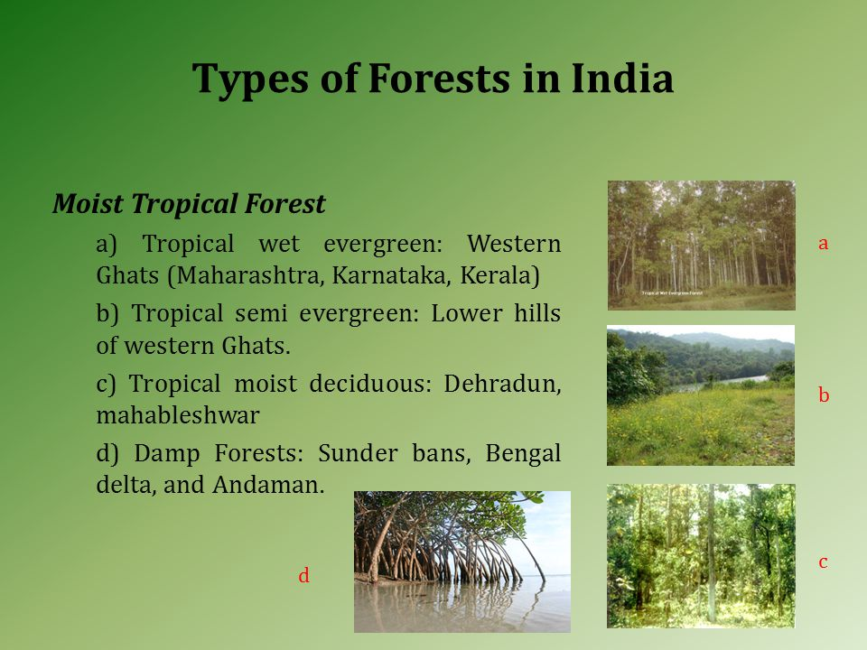 Moist Tropical Forest a) Tropical wet evergreen: Western Ghats (Maharashtra, Karnataka, Kerala) b) Tropical semi evergreen: Lower hills of western Ghats.