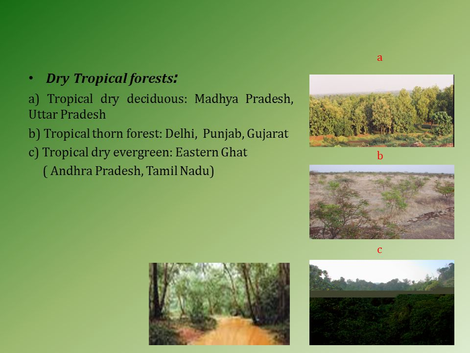 Dry Tropical forests : a) Tropical dry deciduous: Madhya Pradesh, Uttar Pradesh b) Tropical thorn forest: Delhi, Punjab, Gujarat c) Tropical dry evergreen: Eastern Ghat ( Andhra Pradesh, Tamil Nadu) a b c