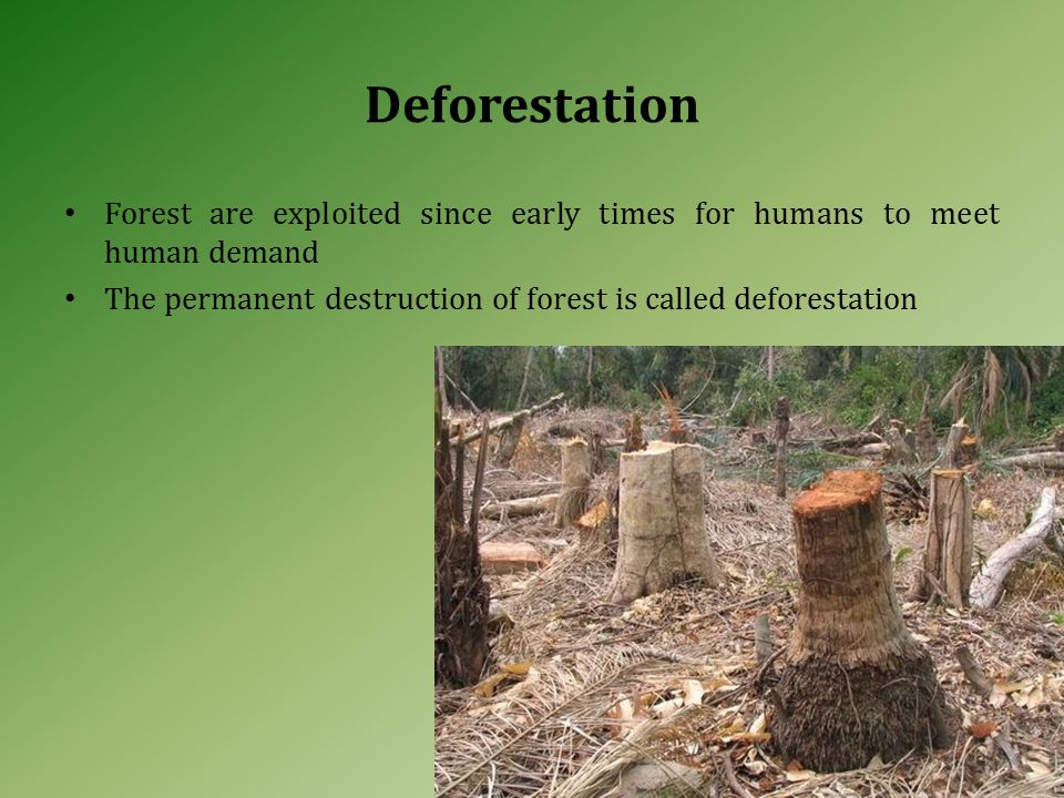 Deforestation Forest are exploited since early times for humans to meet human demand The permanent destruction of forest is called deforestation