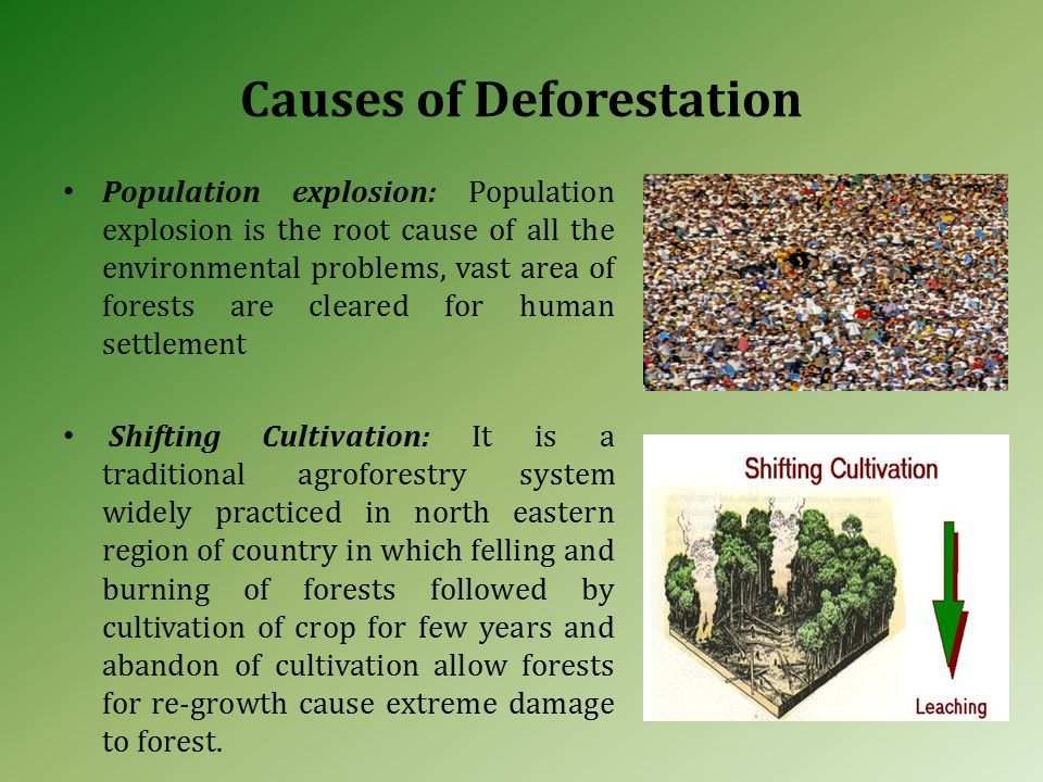 Causes of Deforestation Population explosion: Population explosion is the root cause of all the environmental problems, vast area of forests are cleared for human settlement Shifting Cultivation: It is a traditional agroforestry system widely practiced in north eastern region of country in which felling and burning of forests followed by cultivation of crop for few years and abandon of cultivation allow forests for re-growth cause extreme damage to forest.