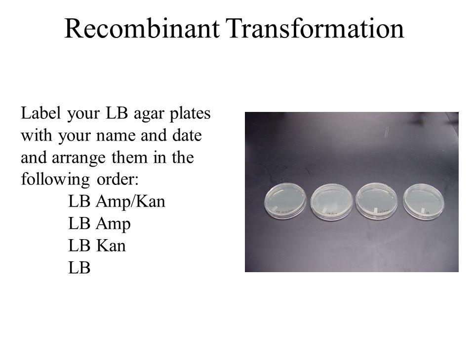 lb kan plates