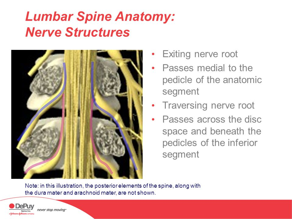 Anatomy of the Lumbar Spine Physician Name Physician Institution ...