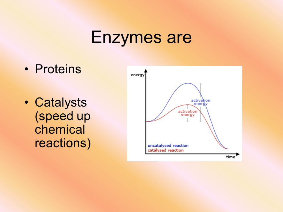 Enzymes are Proteins Catalysts (speed up chemical reactions)
