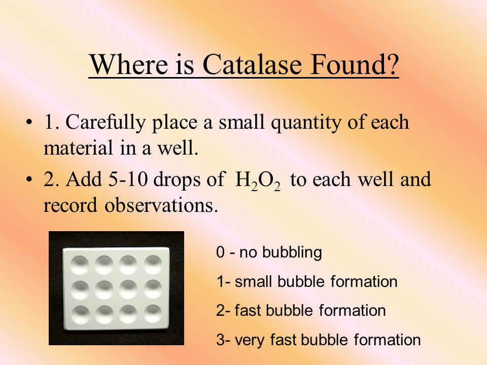 Where is Catalase Found. 1. Carefully place a small quantity of each material in a well.