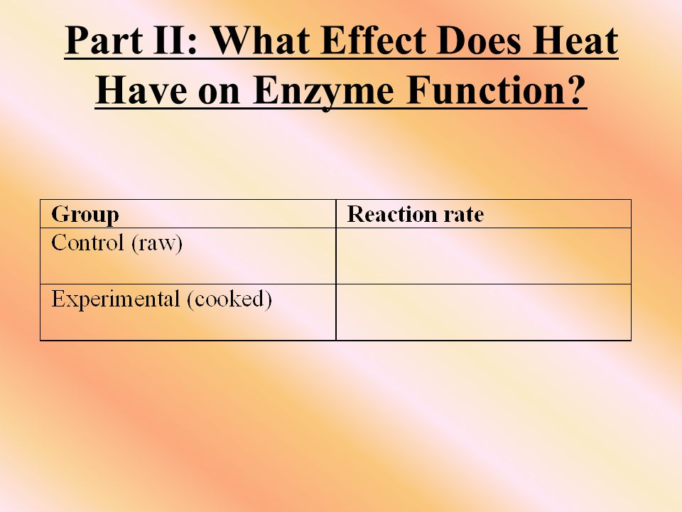 Part II: What Effect Does Heat Have on Enzyme Function