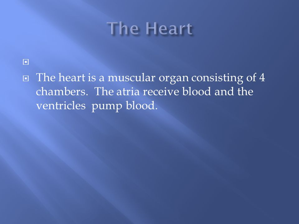  The heart is a muscular organ consisting of 4 chambers.