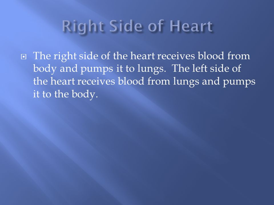  The right side of the heart receives blood from body and pumps it to lungs.