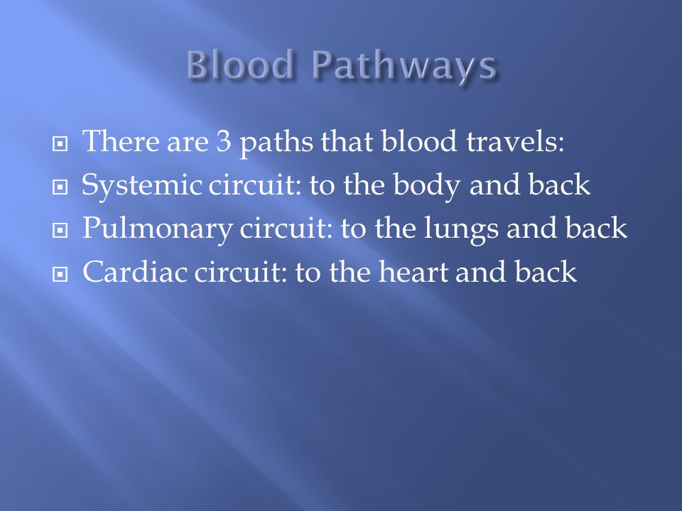 There are 3 paths that blood travels:  Systemic circuit: to the body and back  Pulmonary circuit: to the lungs and back  Cardiac circuit: to the heart and back