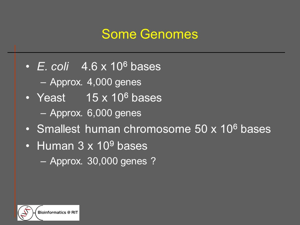 Some Genomes E. coli 4.6 x 10 6 bases –Approx. 4,000 genes Yeast15 x 10 6 bases –Approx.