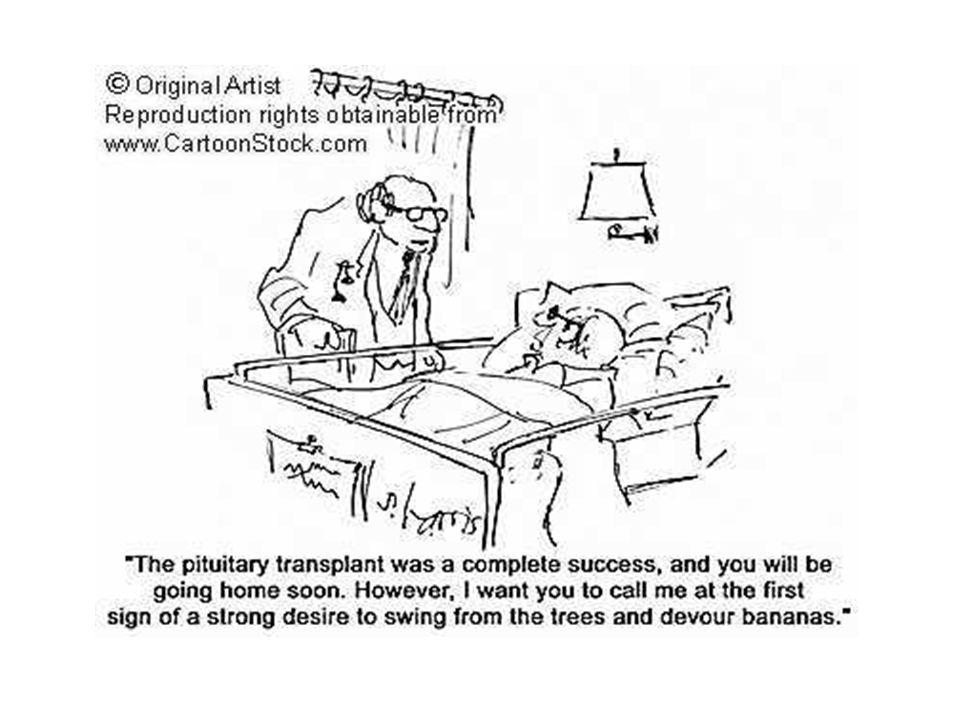 Organs Transplantation Organ Transplant By Alsafwa Medical Family