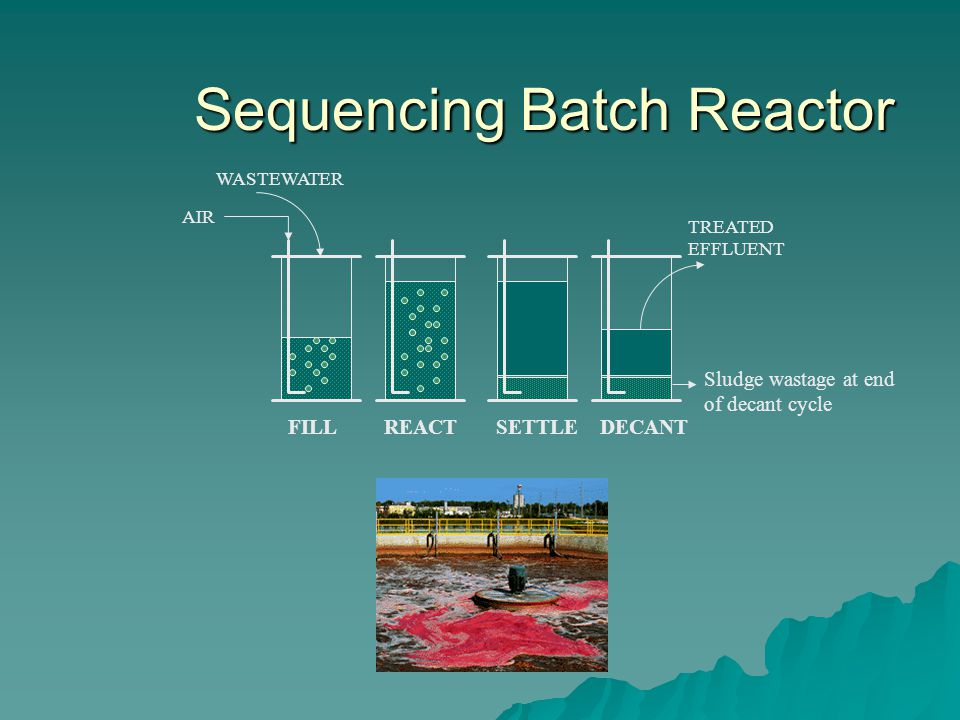 Sequencing Batch Reactor WASTEWATER FILLREACTSETTLEDECANT TREATED EFFLUENT AIR Sludge wastage at end of decant cycle
