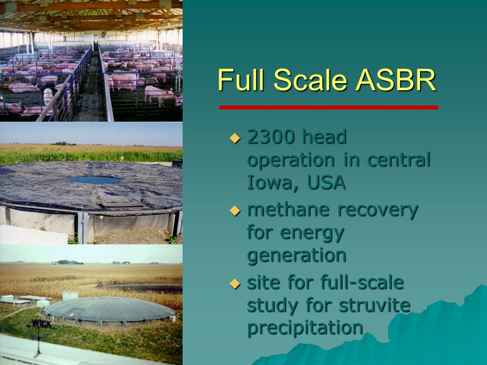 Full Scale ASBR  2300 head operation in central Iowa, USA  methane recovery for energy generation  site for full-scale study for struvite precipitation
