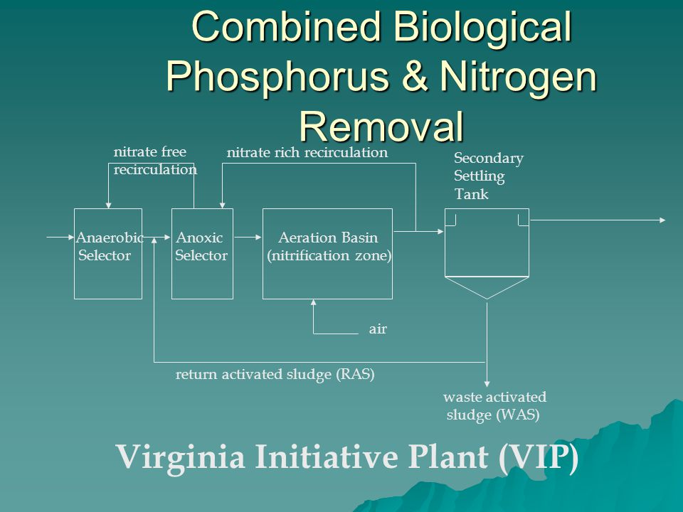 Combined Biological Phosphorus & Nitrogen Removal Aeration Basin (nitrification zone) Secondary Settling Tank Anaerobic Selector air return activated sludge (RAS) waste activated sludge (WAS) nitrate rich recirculation Anoxic Selector Virginia Initiative Plant (VIP) nitrate free recirculation