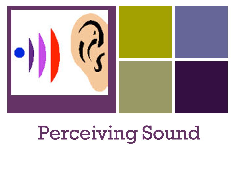 + Perceiving Sound