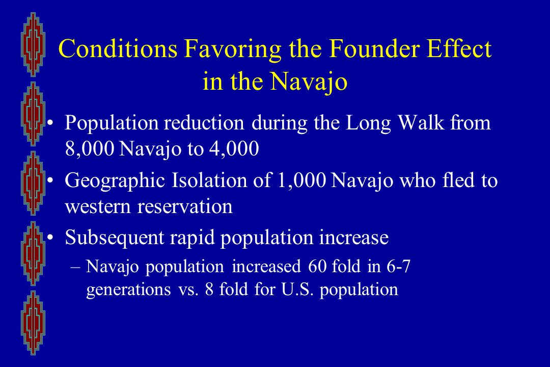 Conditions Favoring the Founder Effect in the Navajo Population reduction during the Long Walk from 8,000 Navajo to 4,000 Geographic Isolation of 1,000 Navajo who fled to western reservation Subsequent rapid population increase –Navajo population increased 60 fold in 6-7 generations vs.