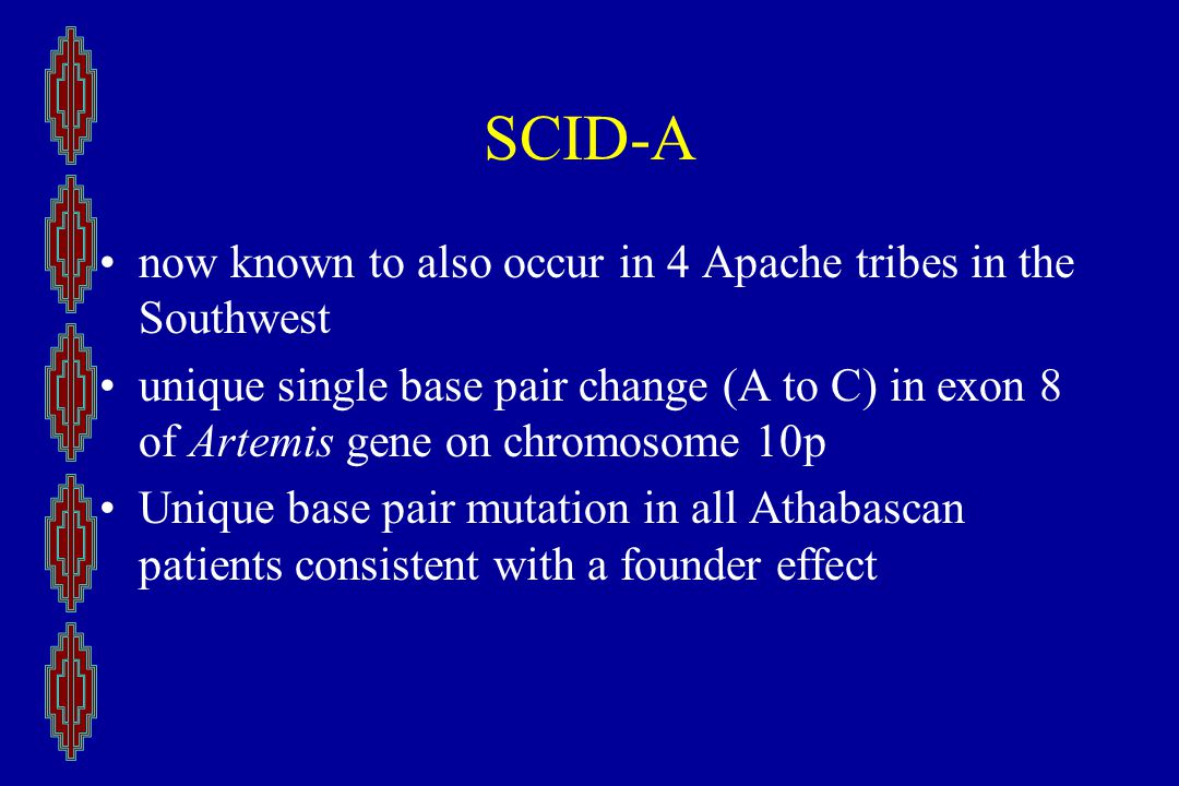 SCID-A now known to also occur in 4 Apache tribes in the Southwest unique single base pair change (A to C) in exon 8 of Artemis gene on chromosome 10p Unique base pair mutation in all Athabascan patients consistent with a founder effect