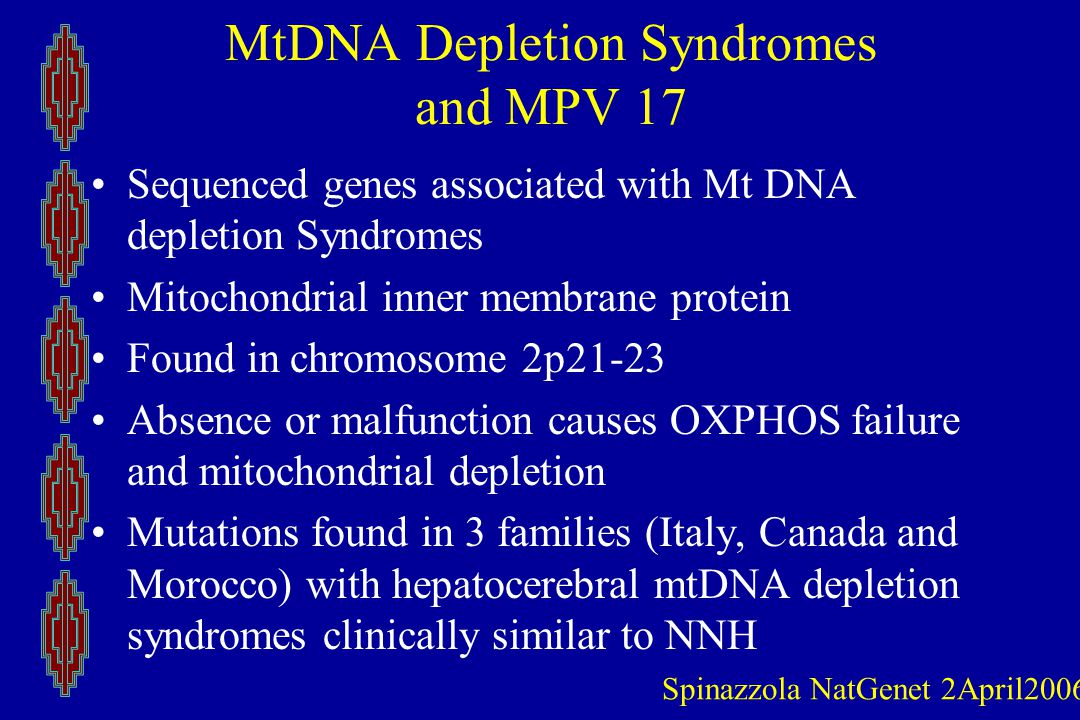 MtDNA Depletion Syndromes and MPV 17 Sequenced genes associated with Mt DNA depletion Syndromes Mitochondrial inner membrane protein Found in chromosome 2p21-23 Absence or malfunction causes OXPHOS failure and mitochondrial depletion Mutations found in 3 families (Italy, Canada and Morocco) with hepatocerebral mtDNA depletion syndromes clinically similar to NNH Spinazzola NatGenet 2April2006