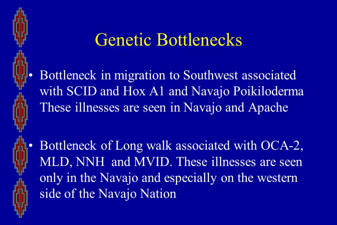 Genetic Bottlenecks Bottleneck in migration to Southwest associated with SCID and Hox A1 and Navajo Poikiloderma These illnesses are seen in Navajo and Apache Bottleneck of Long walk associated with OCA-2, MLD, NNH and MVID.