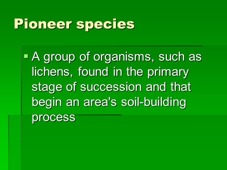 Pioneer species  A group of organisms, such as lichens, found in the primary stage of succession and that begin an area s soil-building process