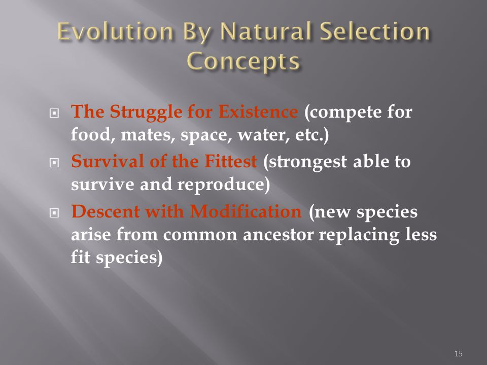  The Struggle for Existence (compete for food, mates, space, water, etc.)  Survival of the Fittest (strongest able to survive and reproduce)  Descent with Modification (new species arise from common ancestor replacing less fit species) 15