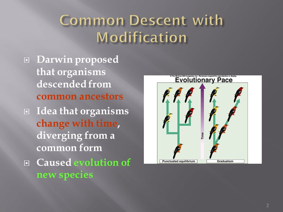  Darwin proposed that organisms descended from common ancestors  Idea that organisms change with time, diverging from a common form  Caused evolution of new species 2